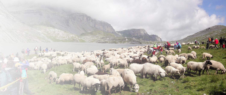 Bauernvereinigung Oberwallis